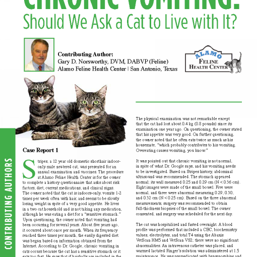 Chronic Vomiting- Should We Ask a Cat to Live with It