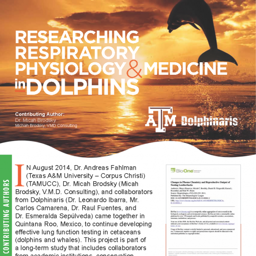 Researching Respiratory Physiology Medicine in Dolphins