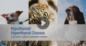 Hyperthyroid and Hypothyroid Disease Awareness