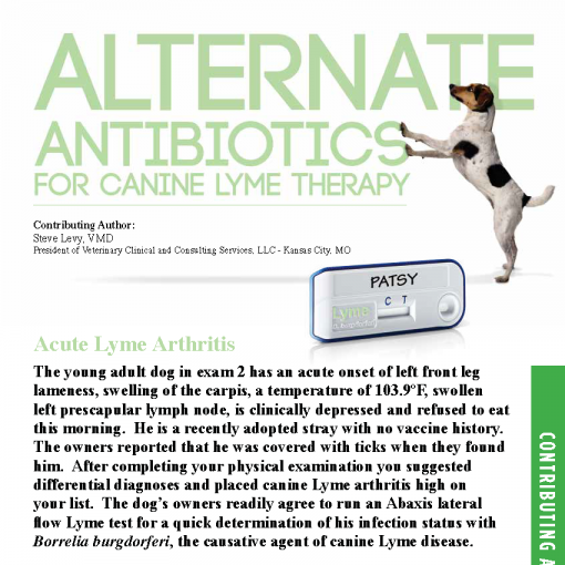 Alternate Antibiotics for Canine Lyme Therapy
