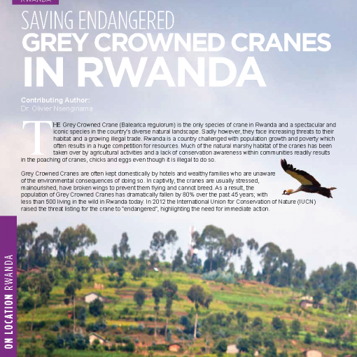 Saving Endangered Grey Crowned Cranes in Rwanda