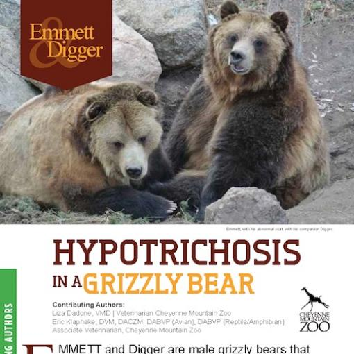 Abaxis Large Animals Grizzly Bears Hypotrichosis