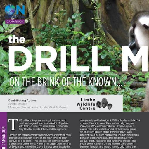 Abaxis Vetcom Article - Drill Monkey